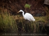 20121007-083210-wine-country-rowing-classic-egret